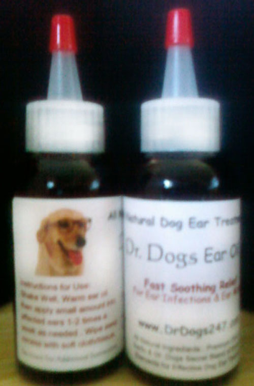 Natural Treatment For Dog Ear Infections - FAQ